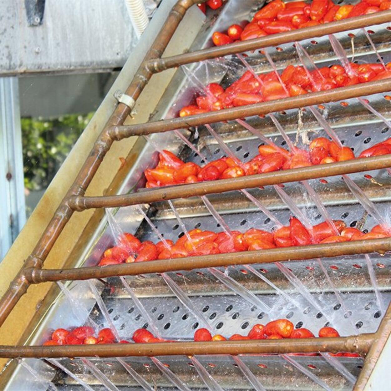 Waschen der Tomanten
