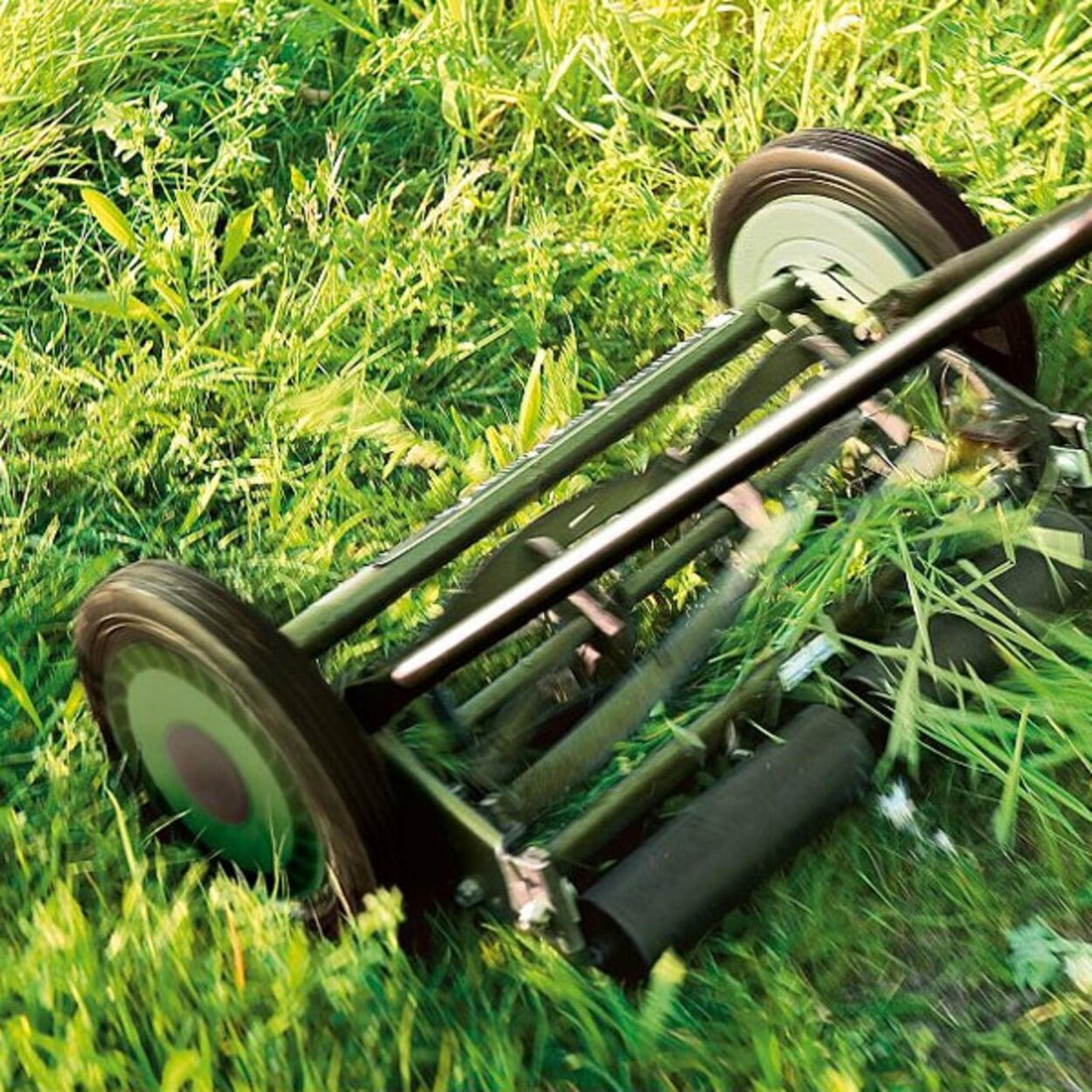 Den Rasen möglichst tief mähen, auf eine Halmlänge von etwa 3 cm.