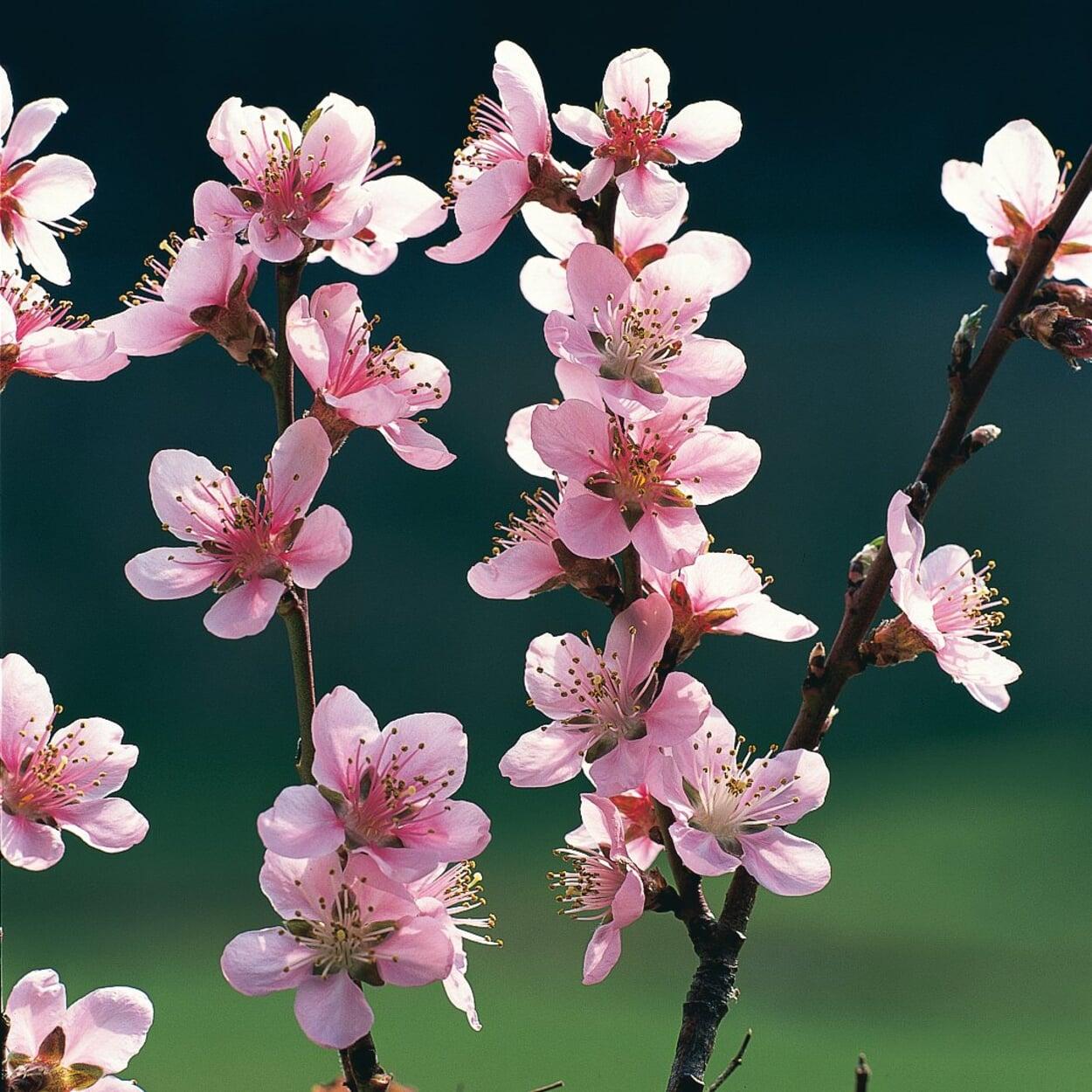 Obstgarten April
