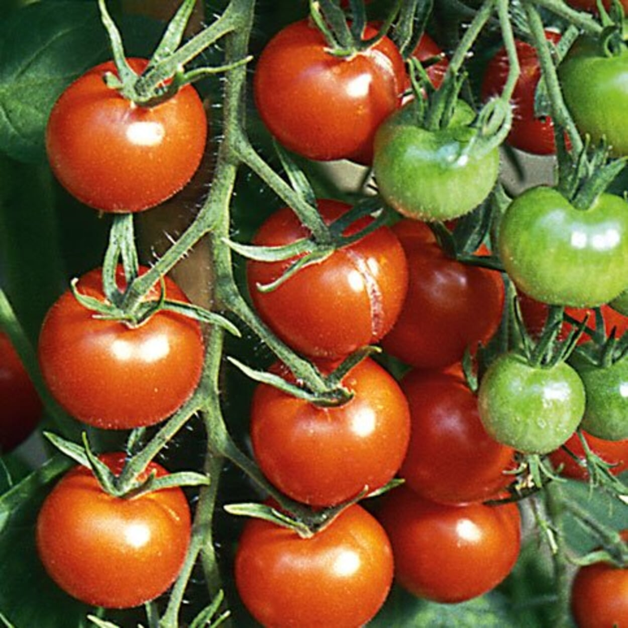 Gemüsegarten Juli
