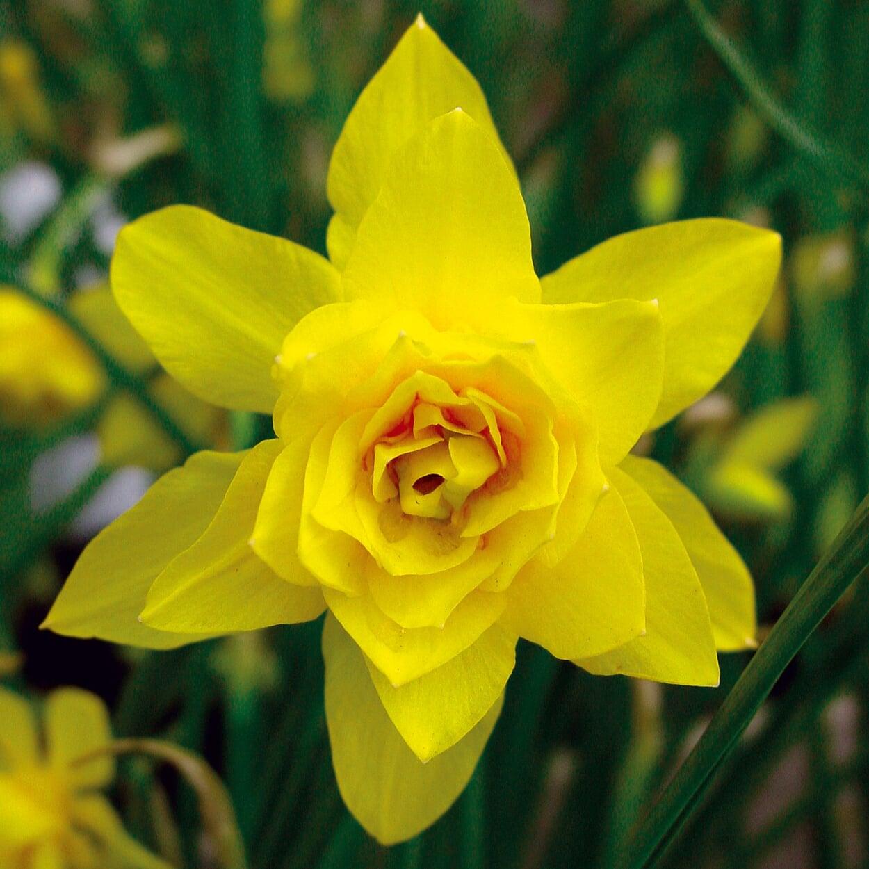 Ziergarten April