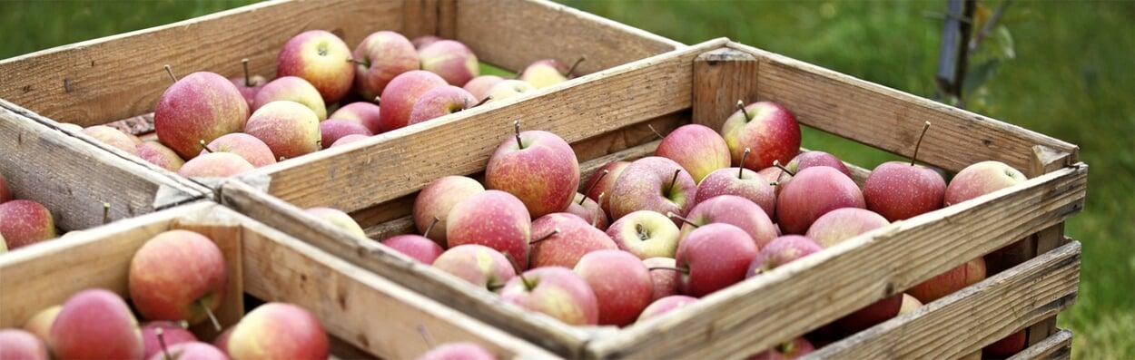 Eingelagerte Äpfel