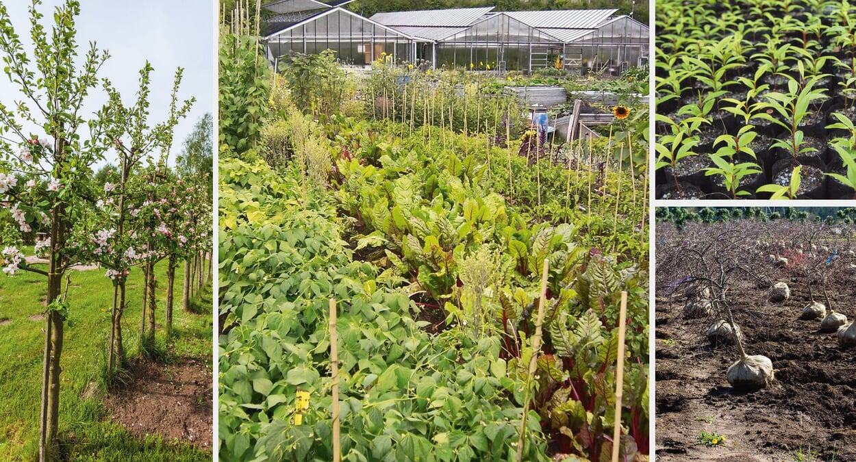 Auswahlkriterien unserer Pflanzen