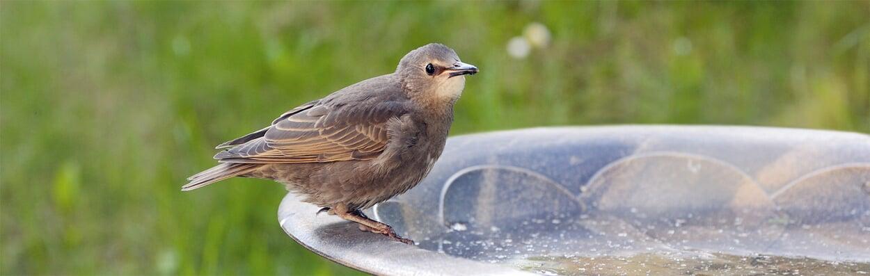 Bad und Tränke für Vögel aufstellen