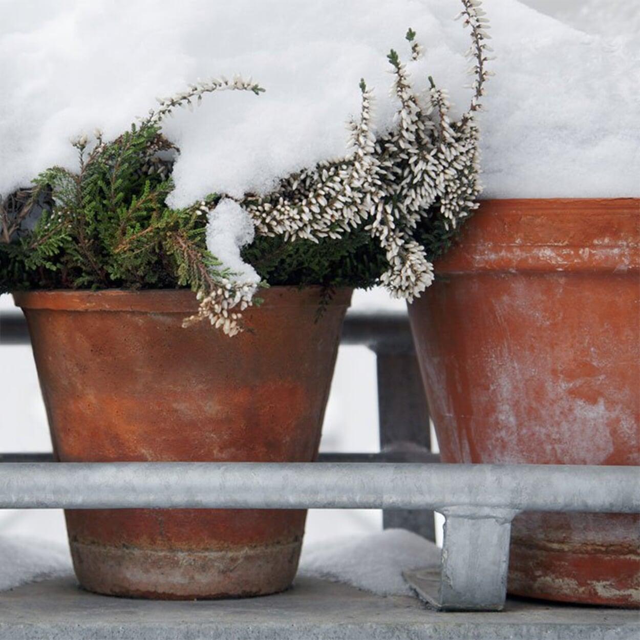 Balkon- und Zimmergarten Januar