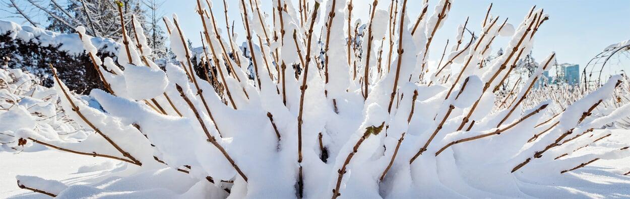 Bei empfindlichen Pflanzen Winterschutz anbringen