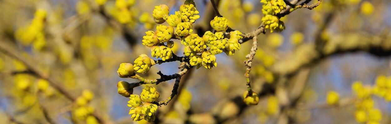 Blütenzweige für die Vase schneiden