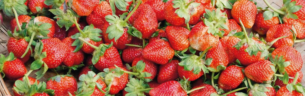 Erdbeeren ernten und verarbeiten