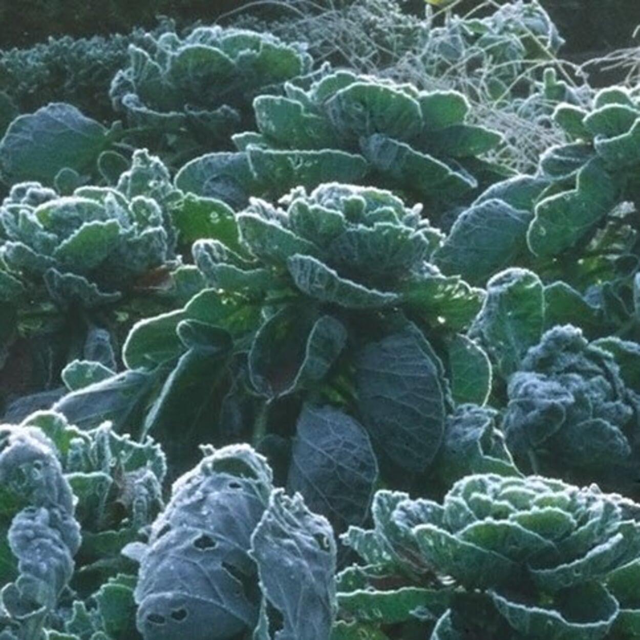 Gemüsegarten Januar