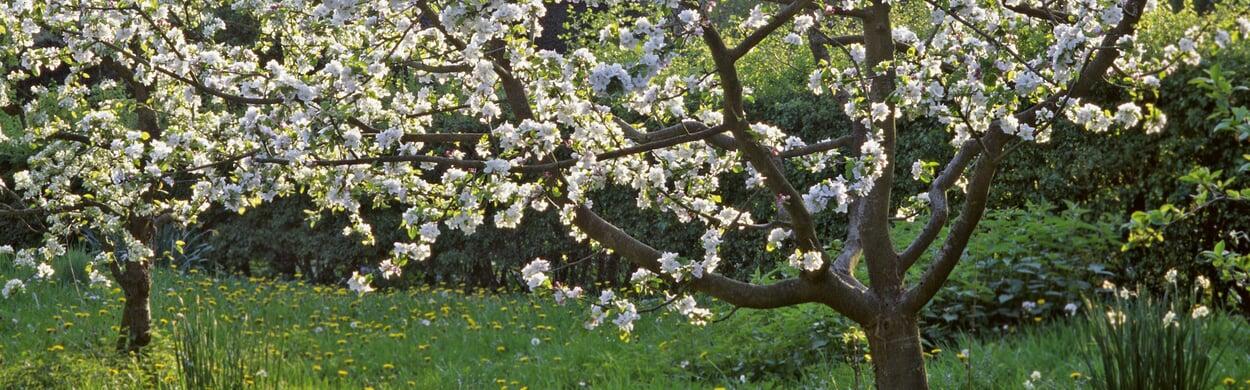 Obstbäume düngen
