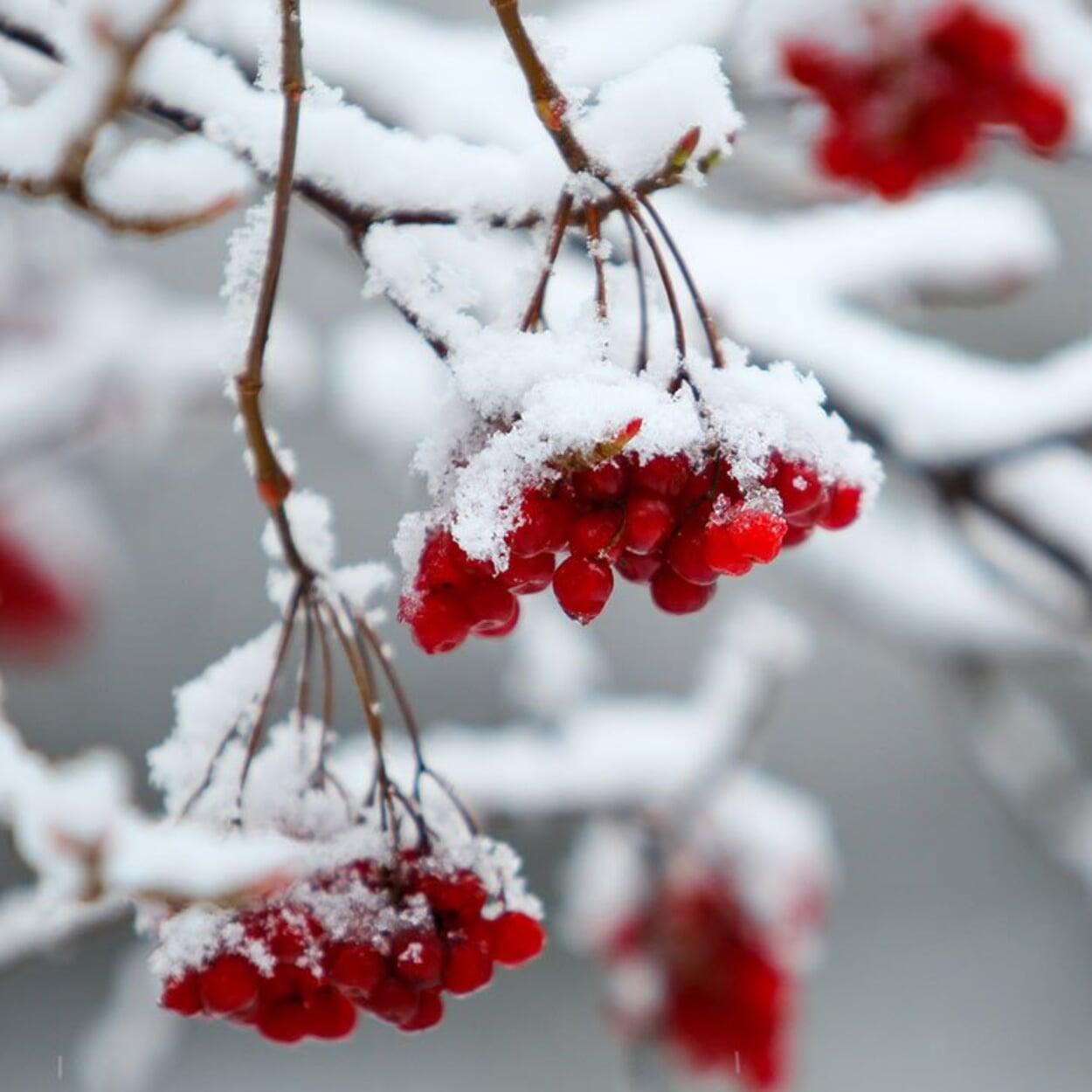 Obstgarten Januar