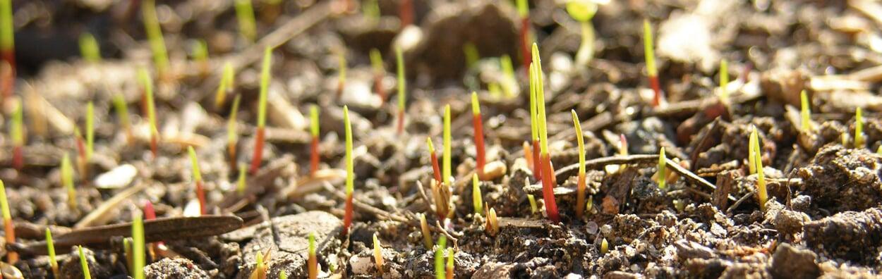 Rasen aussäen und auf den Winter vorbereiten