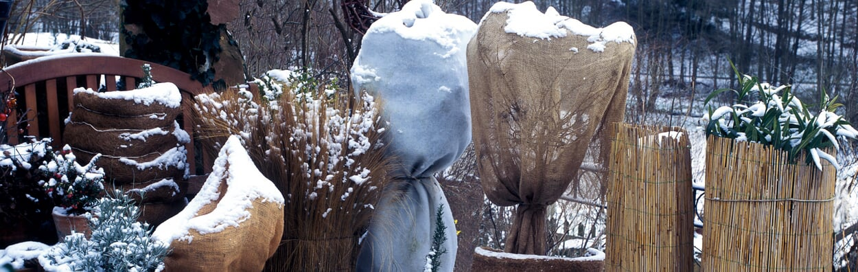 Winterharte Kübelpflanzen vor Frost schützen