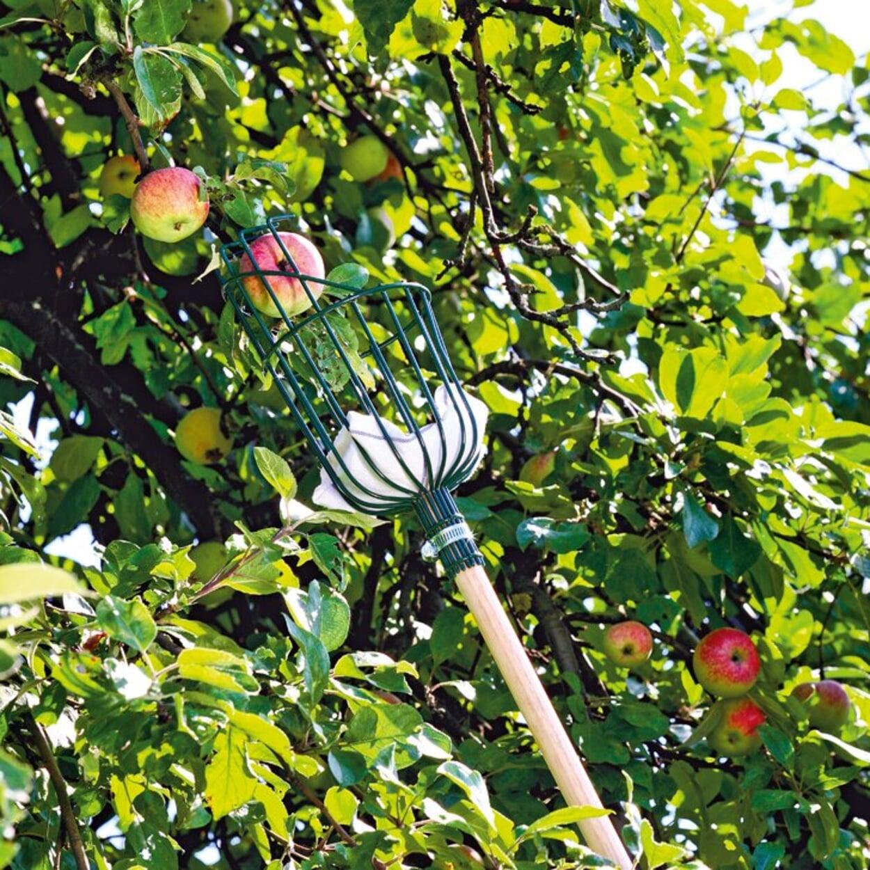 Äpfel ernten mit Pflückgerät