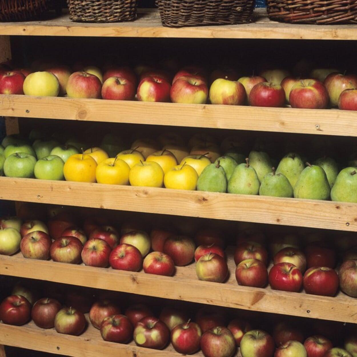 Äpfel in flachen Stiegen lagern