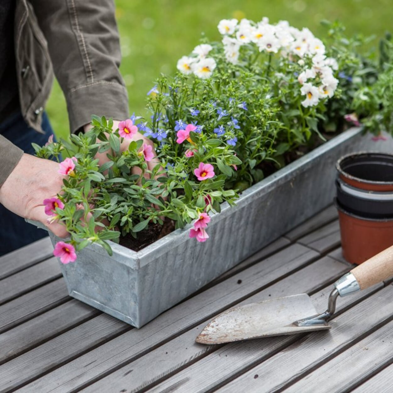 Pflanzen in den Balkonkasten einsetzen