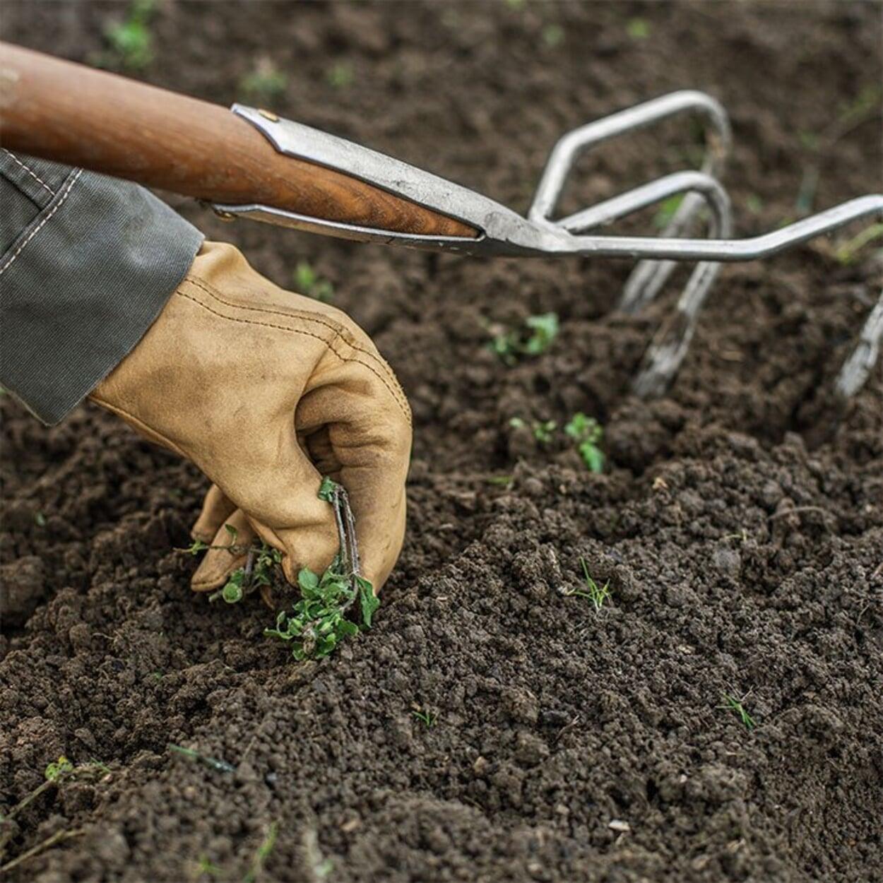 Den Boden durchziehen, Unkraut und Steine entfernen