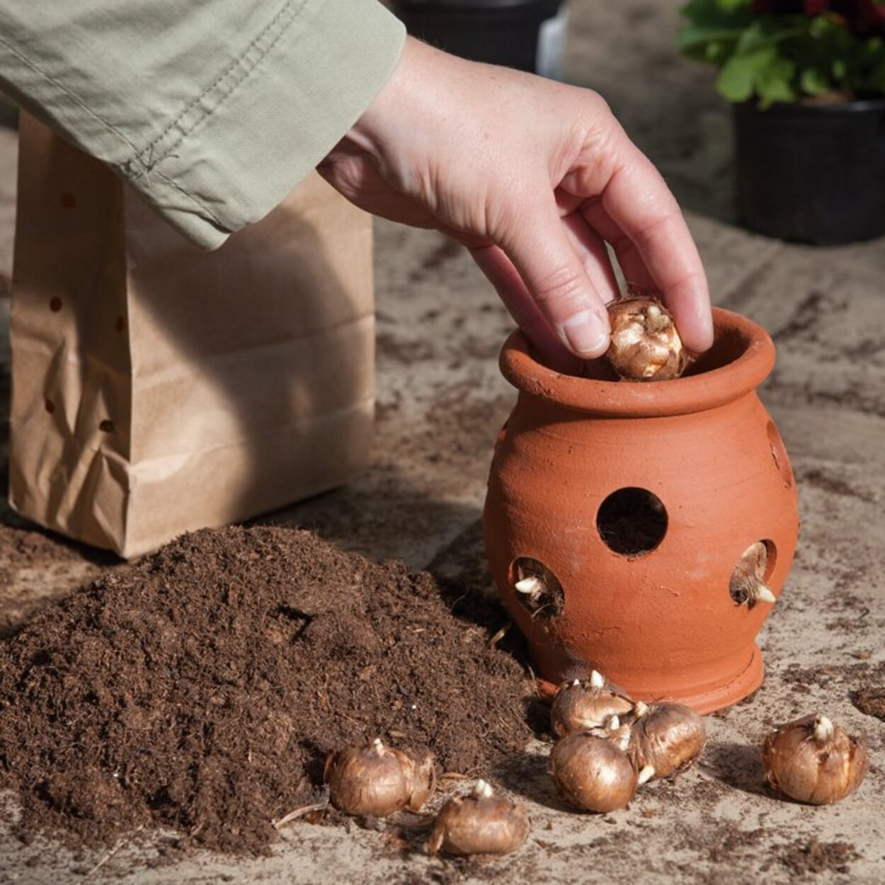 """""""Krokustöpfe"""" eignen sich für die Bepflanzung mit kleinen Zwiebelblumen"""
