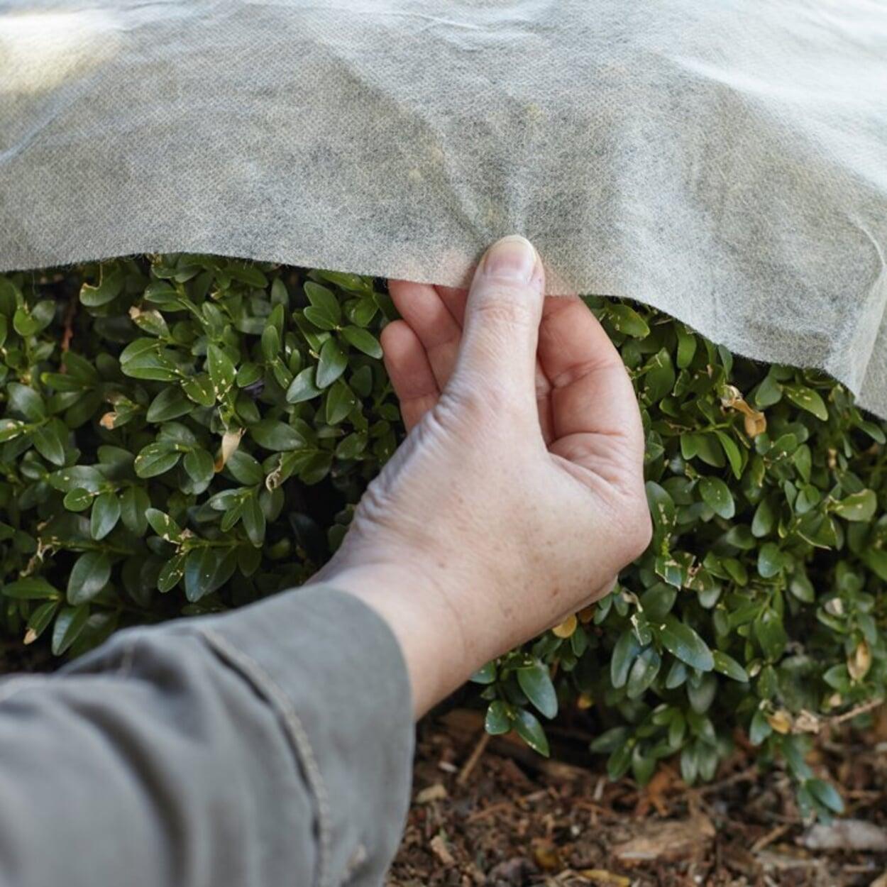 Immergrüne Pflanzen schattieren, um die Verdunstung zu reduzieren
