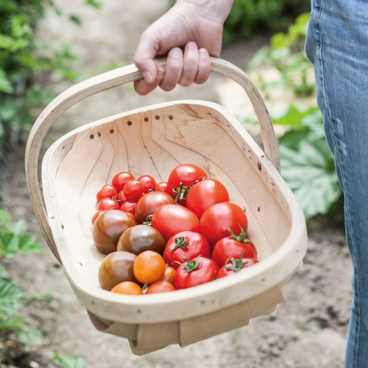 Flaches Erntegefäß für Tomaten