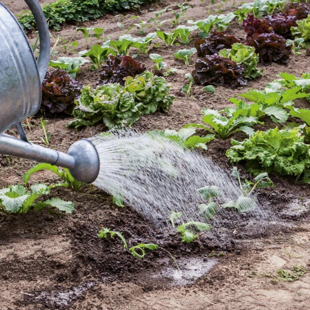 Gemüsebeet gießen