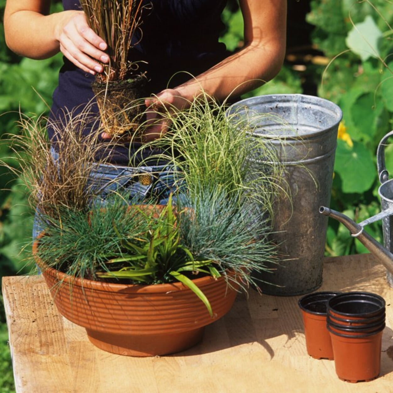 Gräser in Schale pflanzen