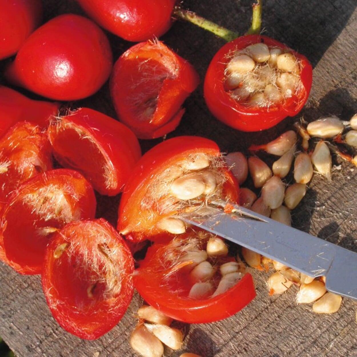Dann längs halbieren und die Samen entfernen