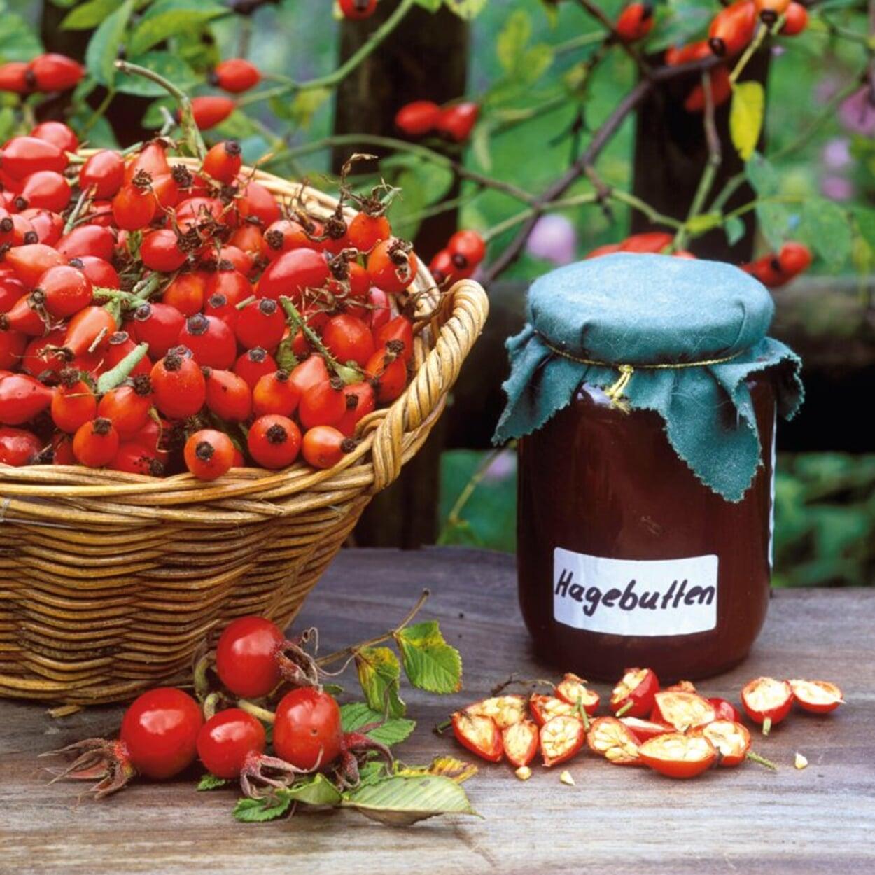 Aus frischen Hagebutten lässt sich zum Beispiel Marmelade herstellen