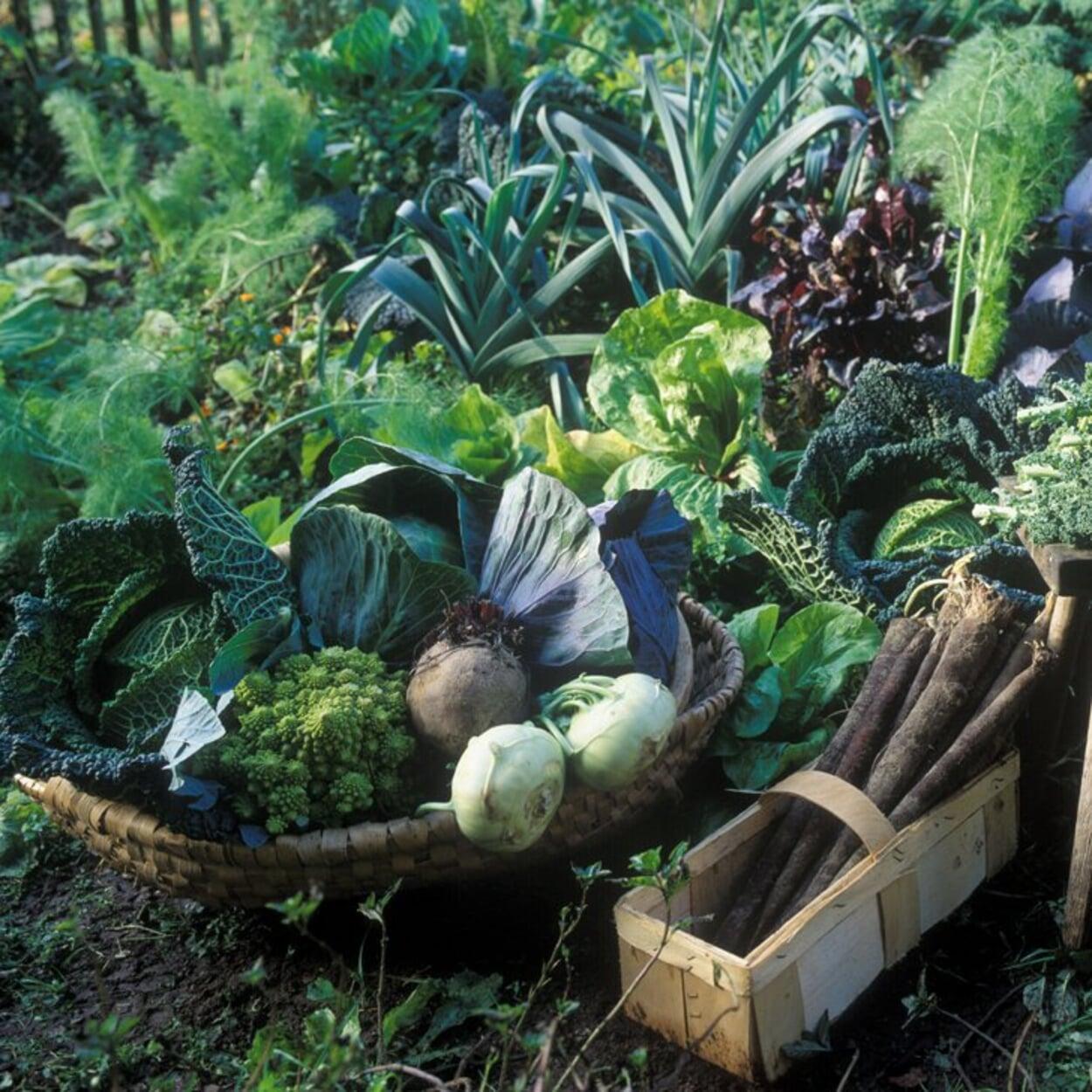 Außer den Winterkulturen alle Gemüse bis zum Spätherbst ernten