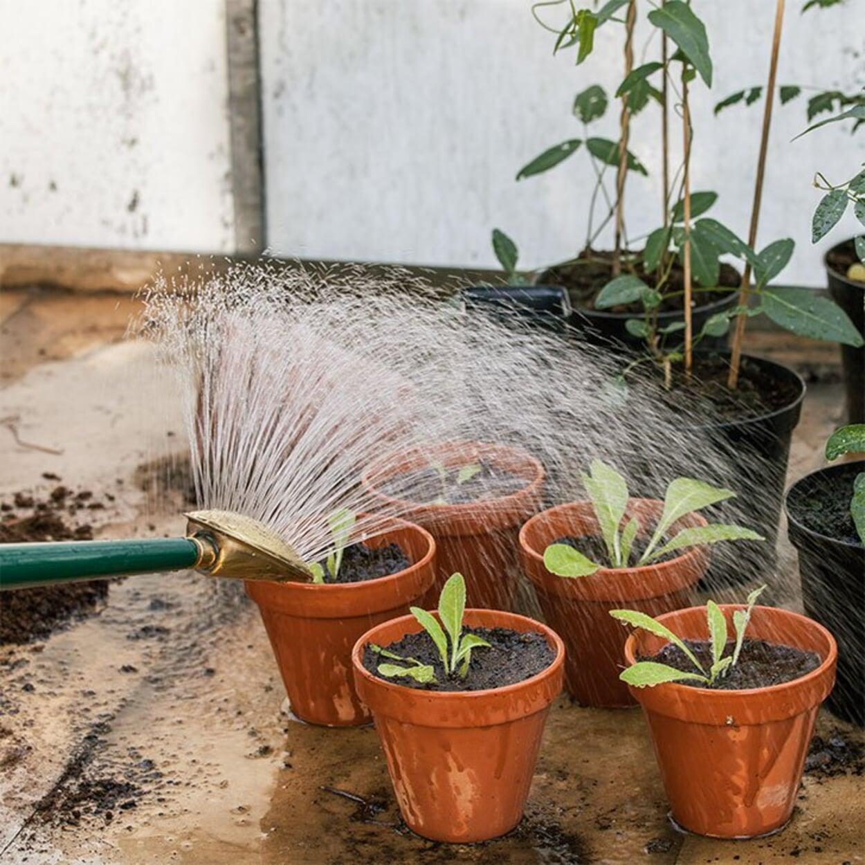 Frisch getopfte Pflanzen angießen