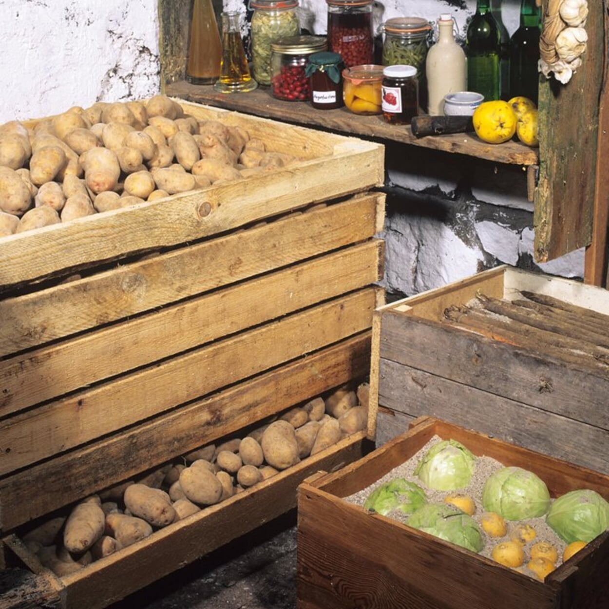 Kartoffeln in Kisten kühl lagern