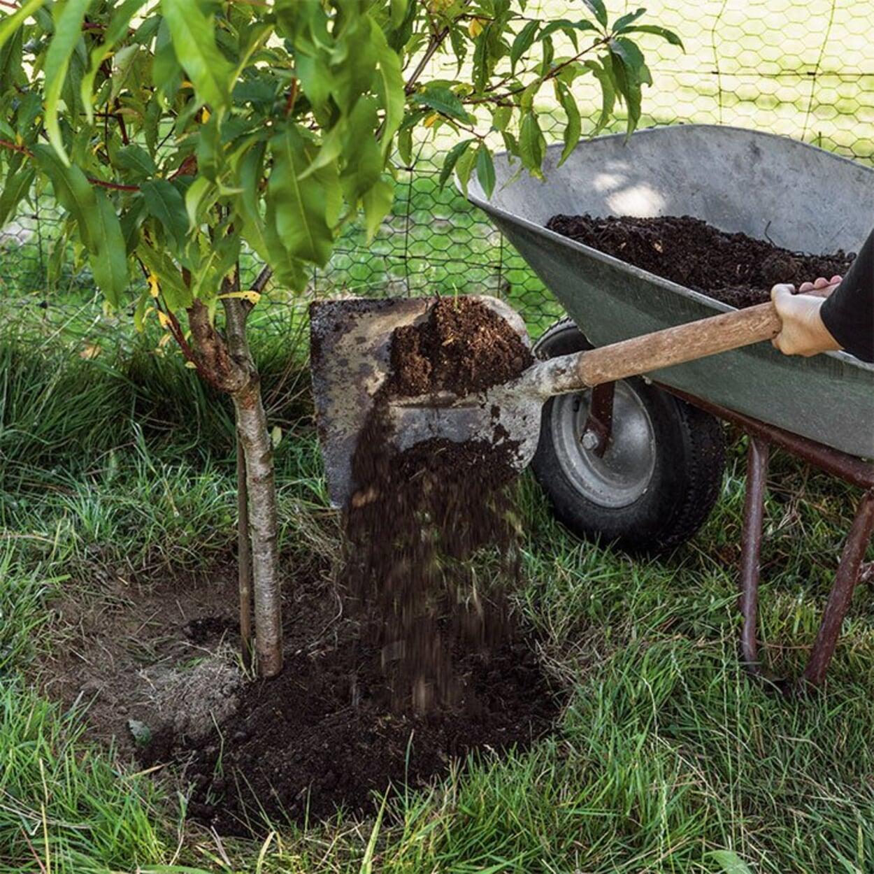 Kompost auf Baumscheiben ausbringen