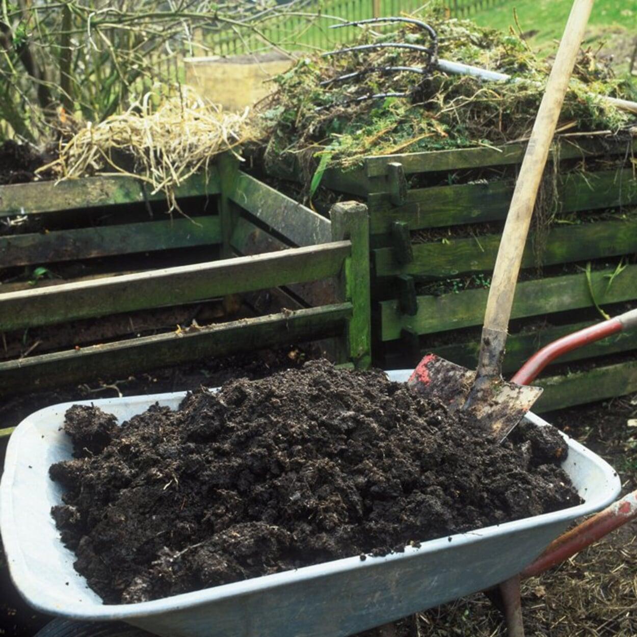 Bei zu geringem Humusgehalt noch vor dem Winter Kompost oder Mist auf die Beete ausbringen