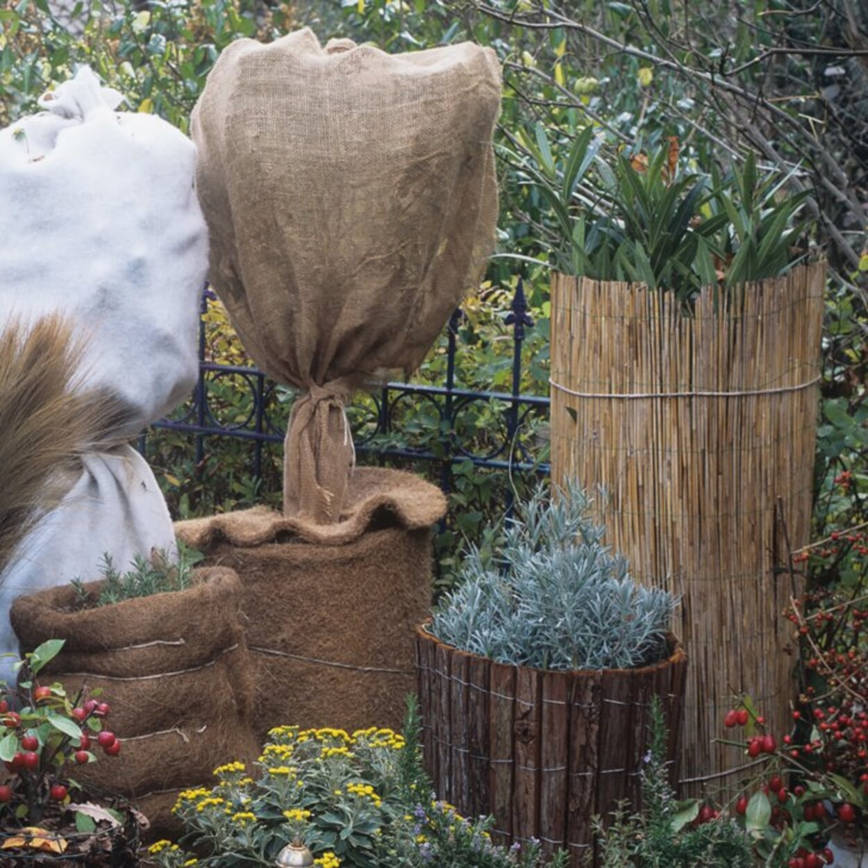 Robuster Vlies-Stoff, der Pflanzen vor Kälte, Wind und Schneelast schützt