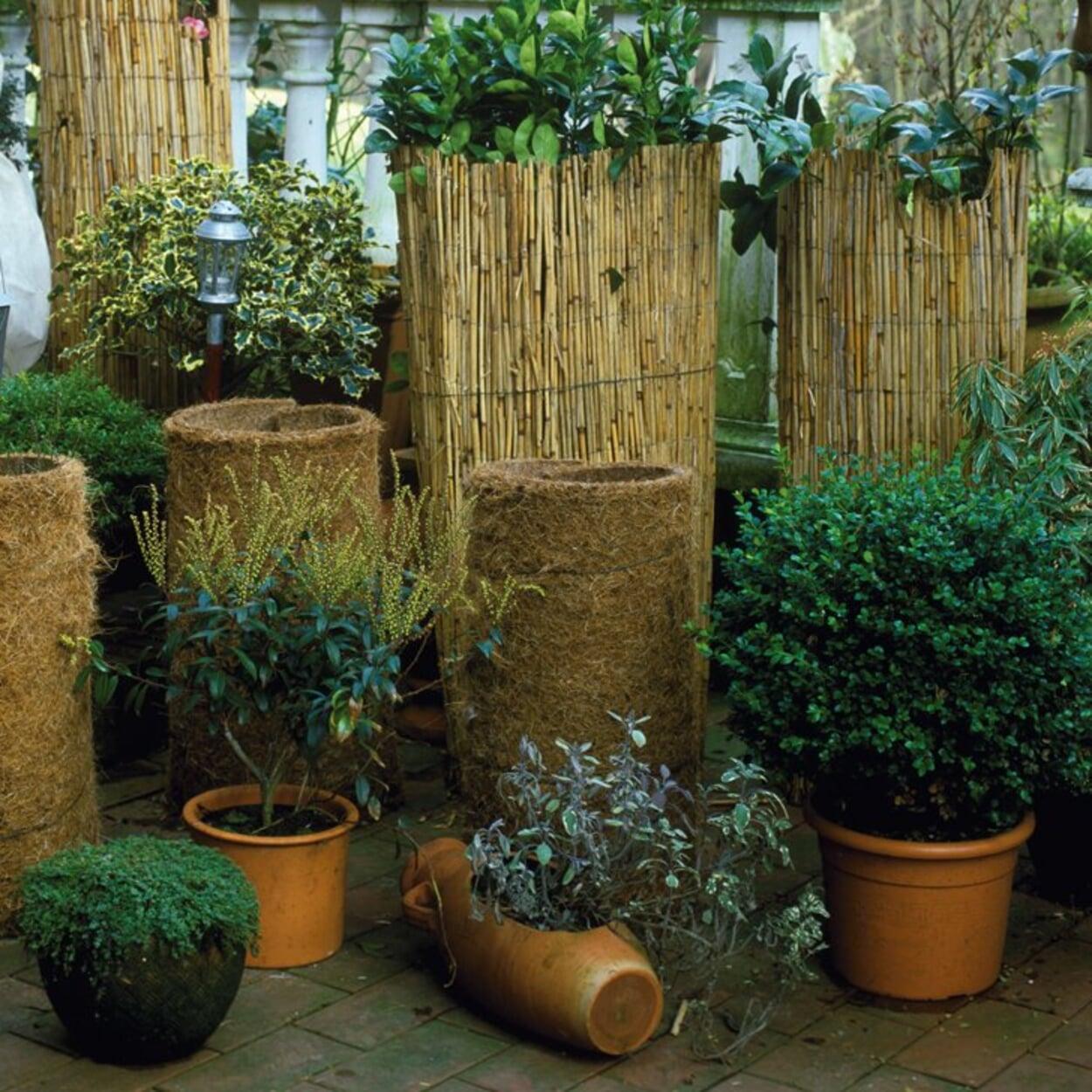 Töpfe mit Kokosmatten oder Matten aus Stroh oder Bambus umhüllen um die Wurzeln zu schützen