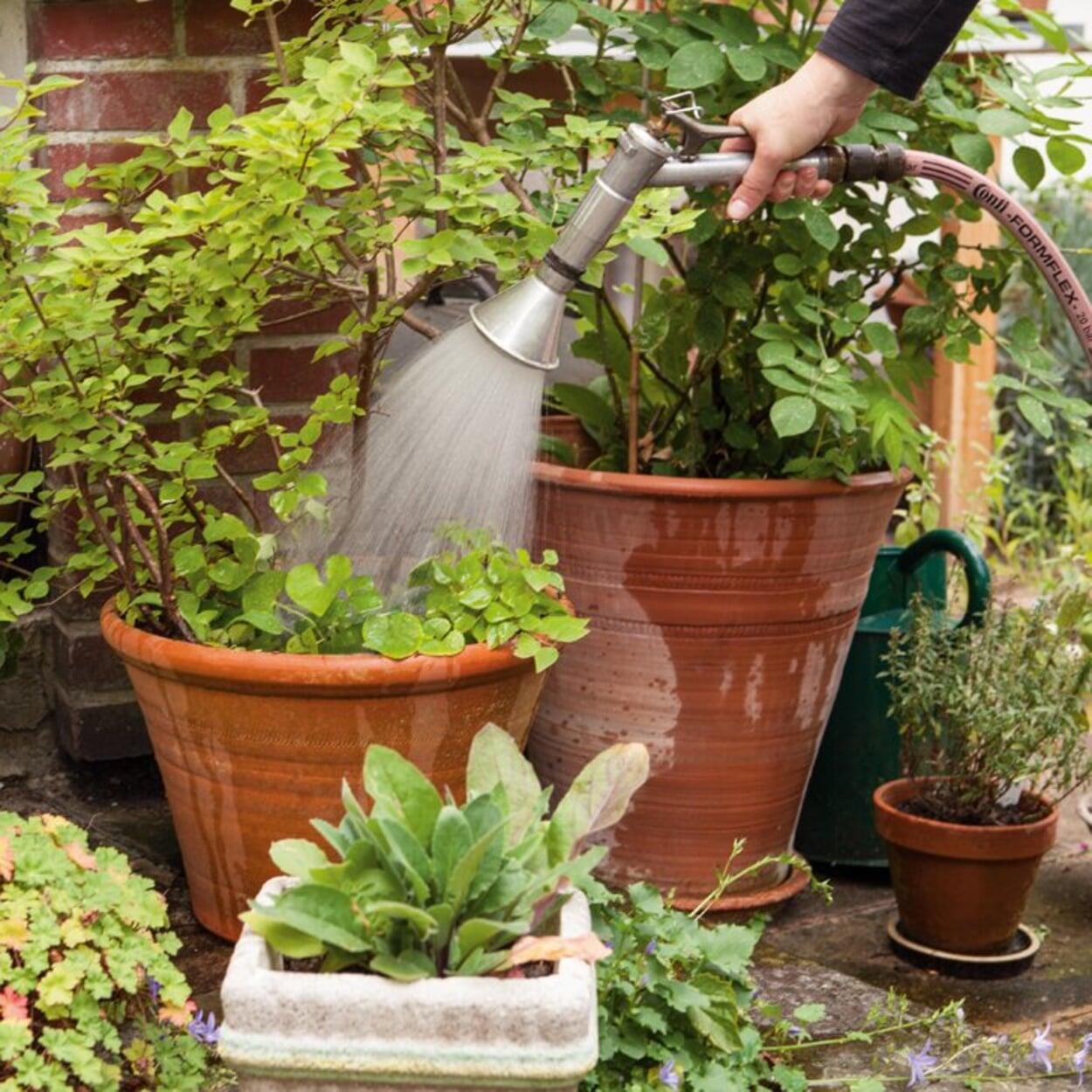 Größere Kübelpflanzen mit Gießbrause und Schlauch gießen