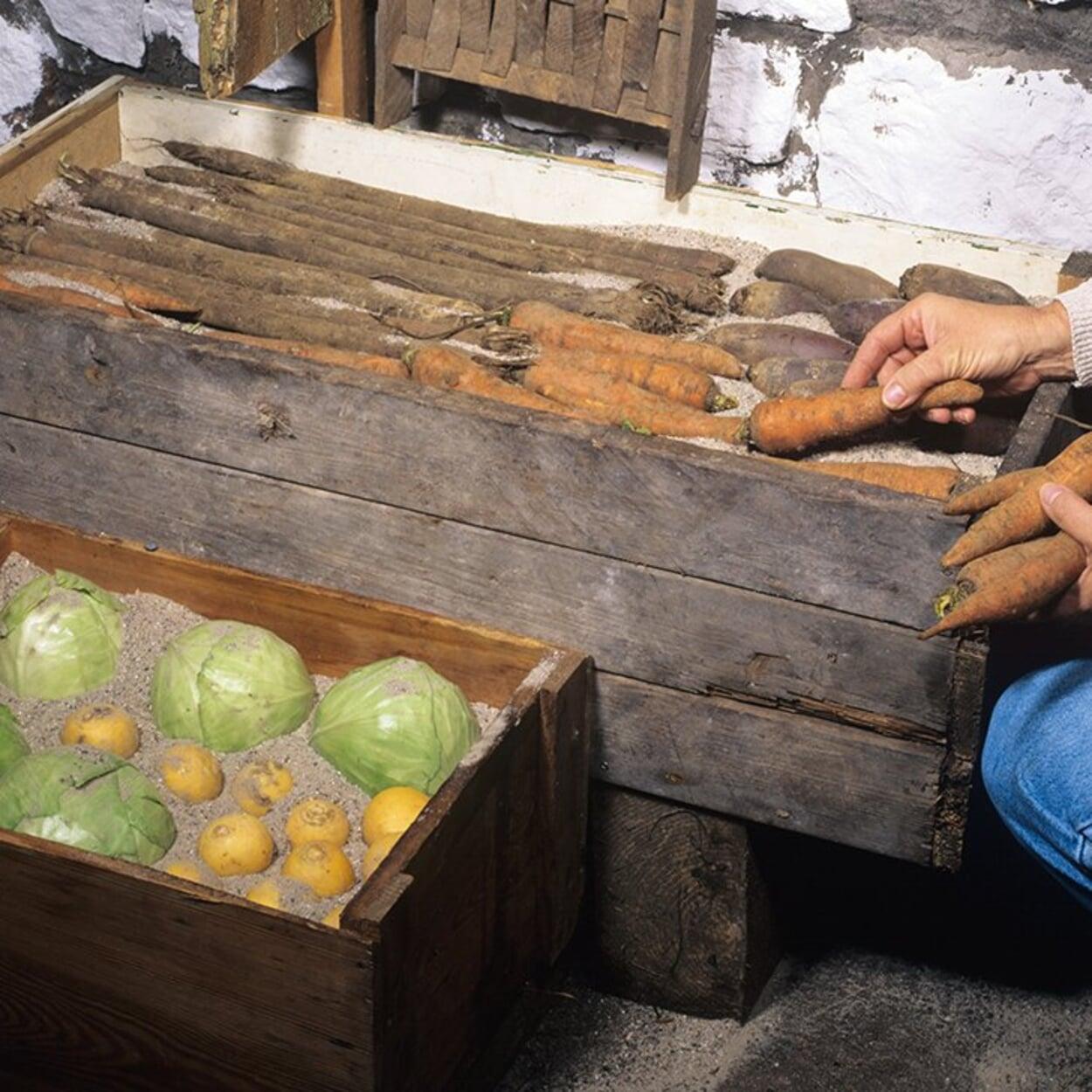 Wird Obst oder Gemüse entnommen, den verbleibenden Vorrat auf Schäden kontrollieren