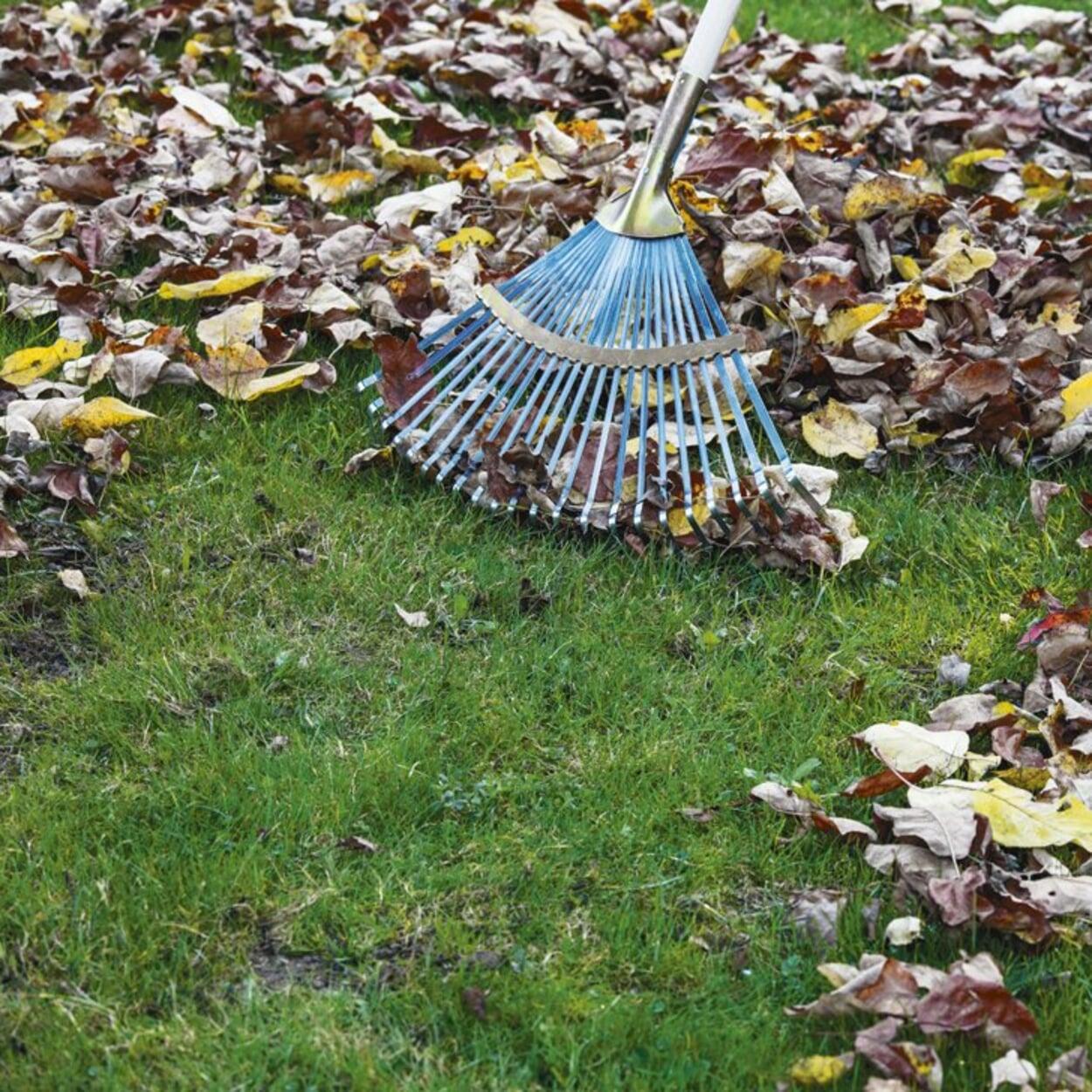 Falllaub regelmäßig vom Rasen entfernen