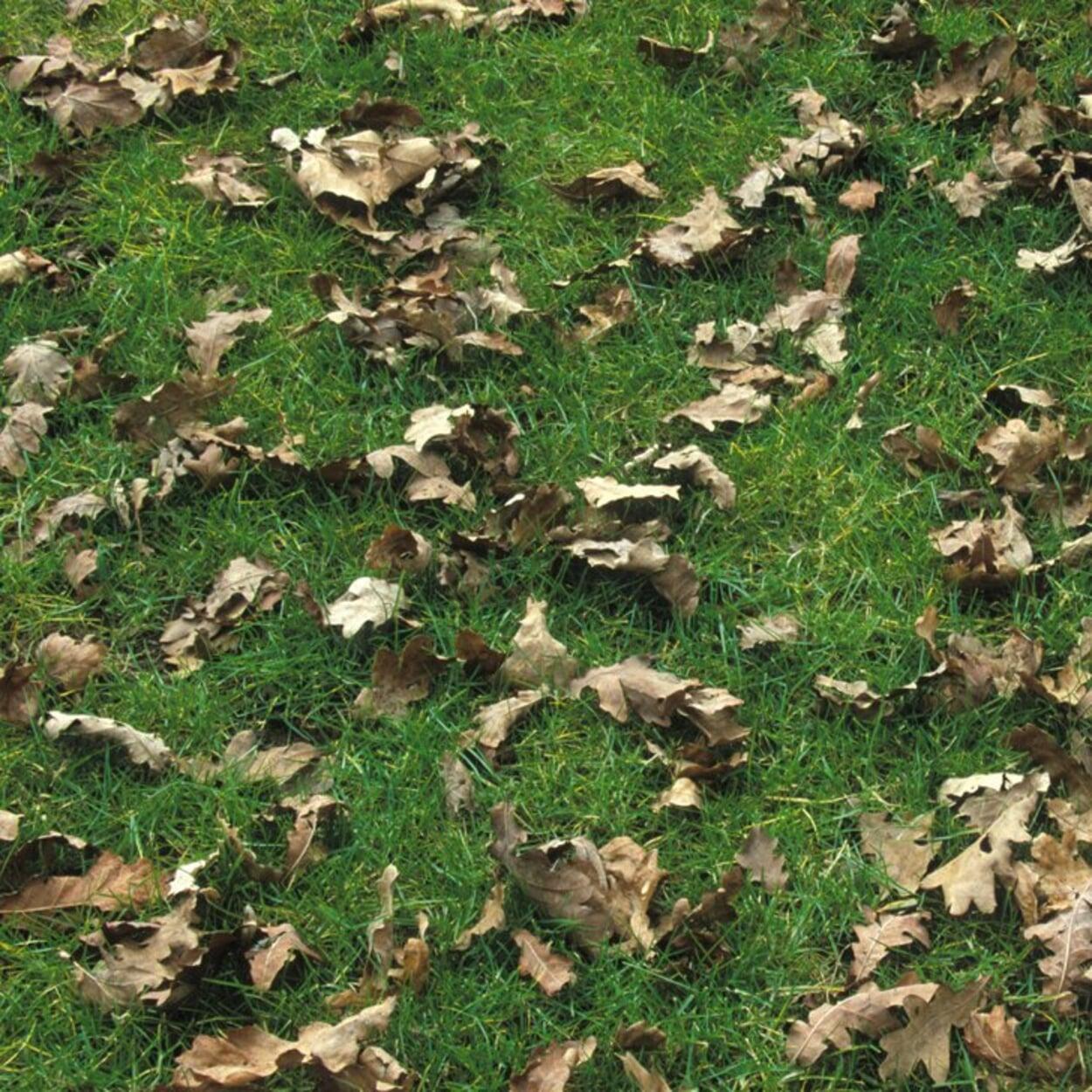 """Geringe Laubmengen können """"mitgemäht"""" und mit dem Grasschnitt kompostiert werden"""