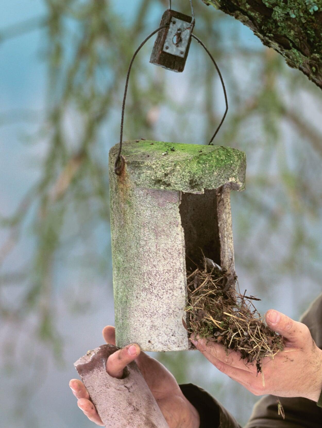Nach den ersten starken Frösten das alte Nest entfernen