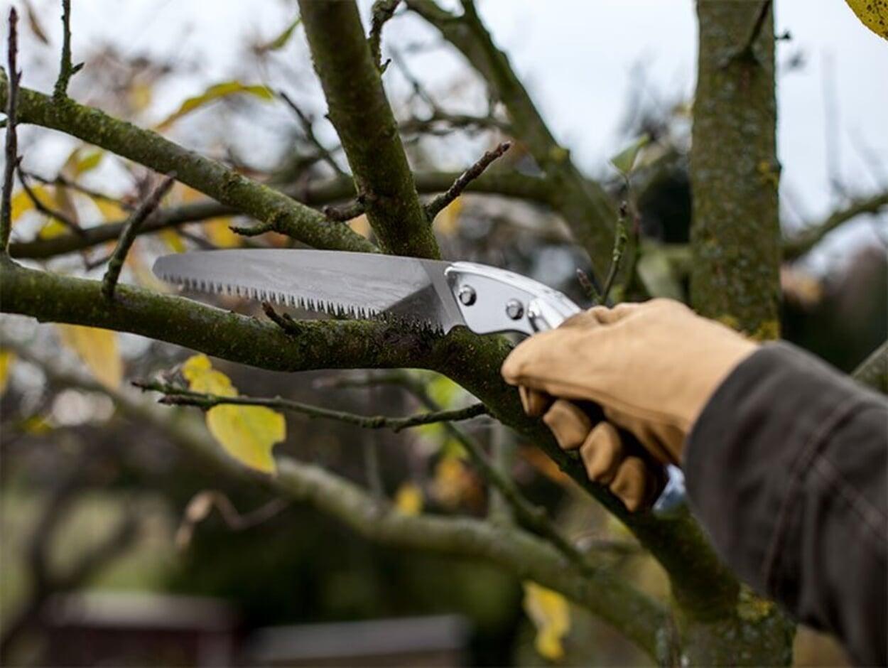 Obstbäume schneiden