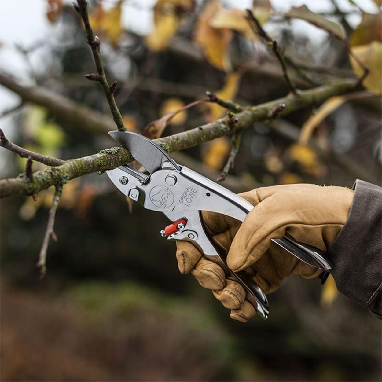 Zweige mit einer Amboss-Schere schneiden