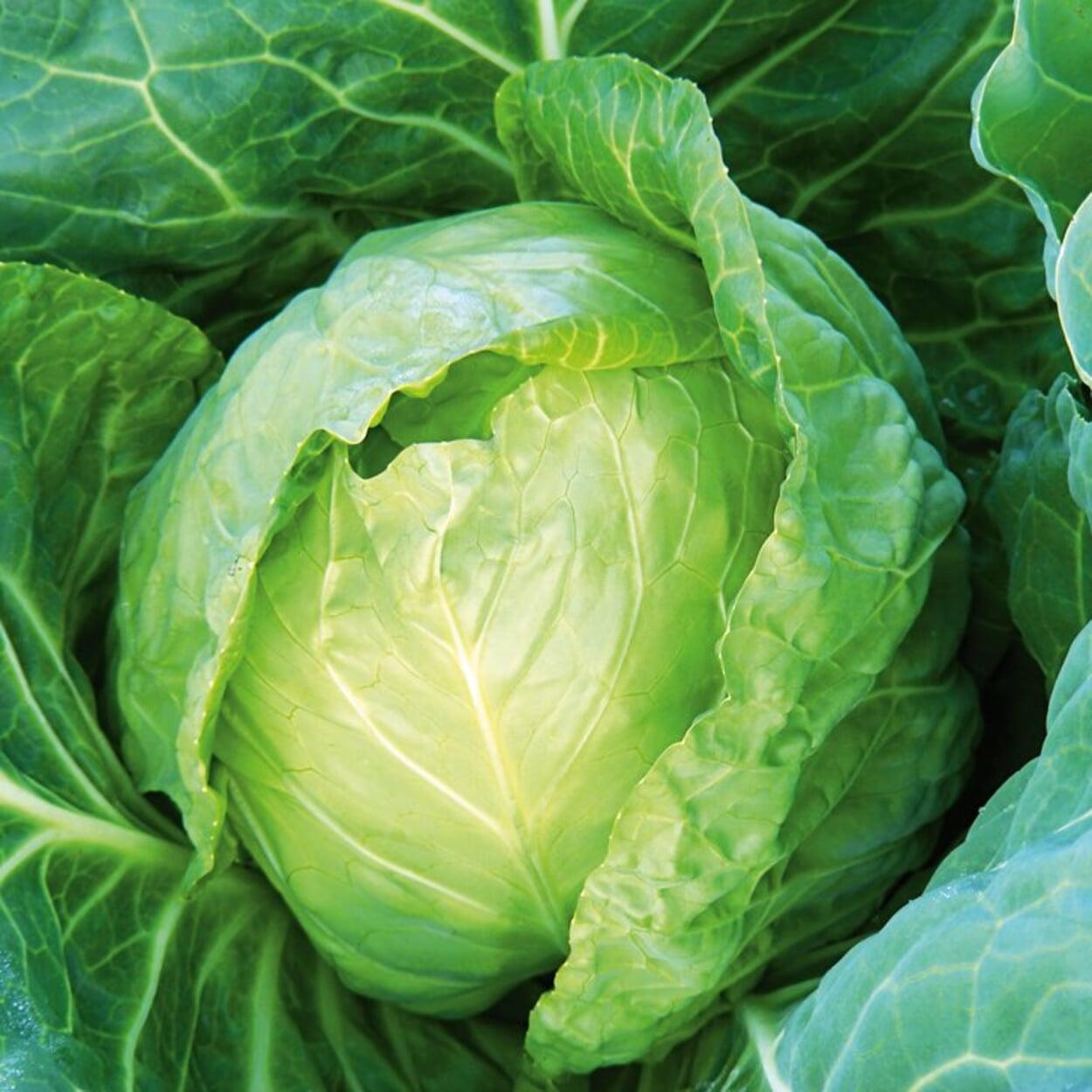 Gemüsegarten September