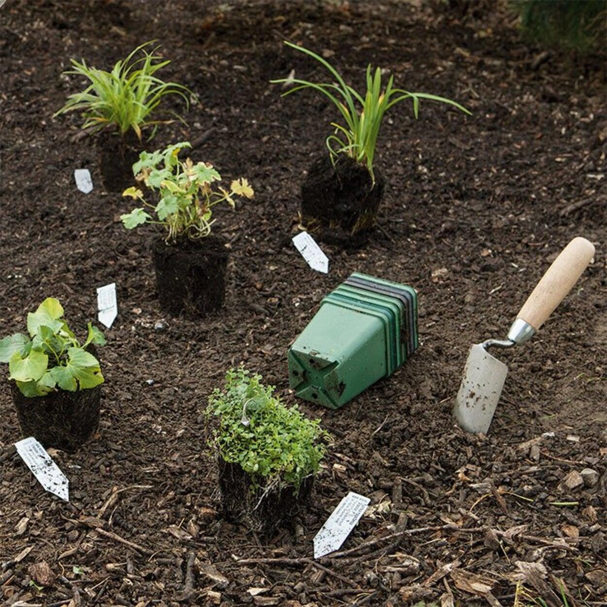 Die Pflanzen austopfen und auslegen