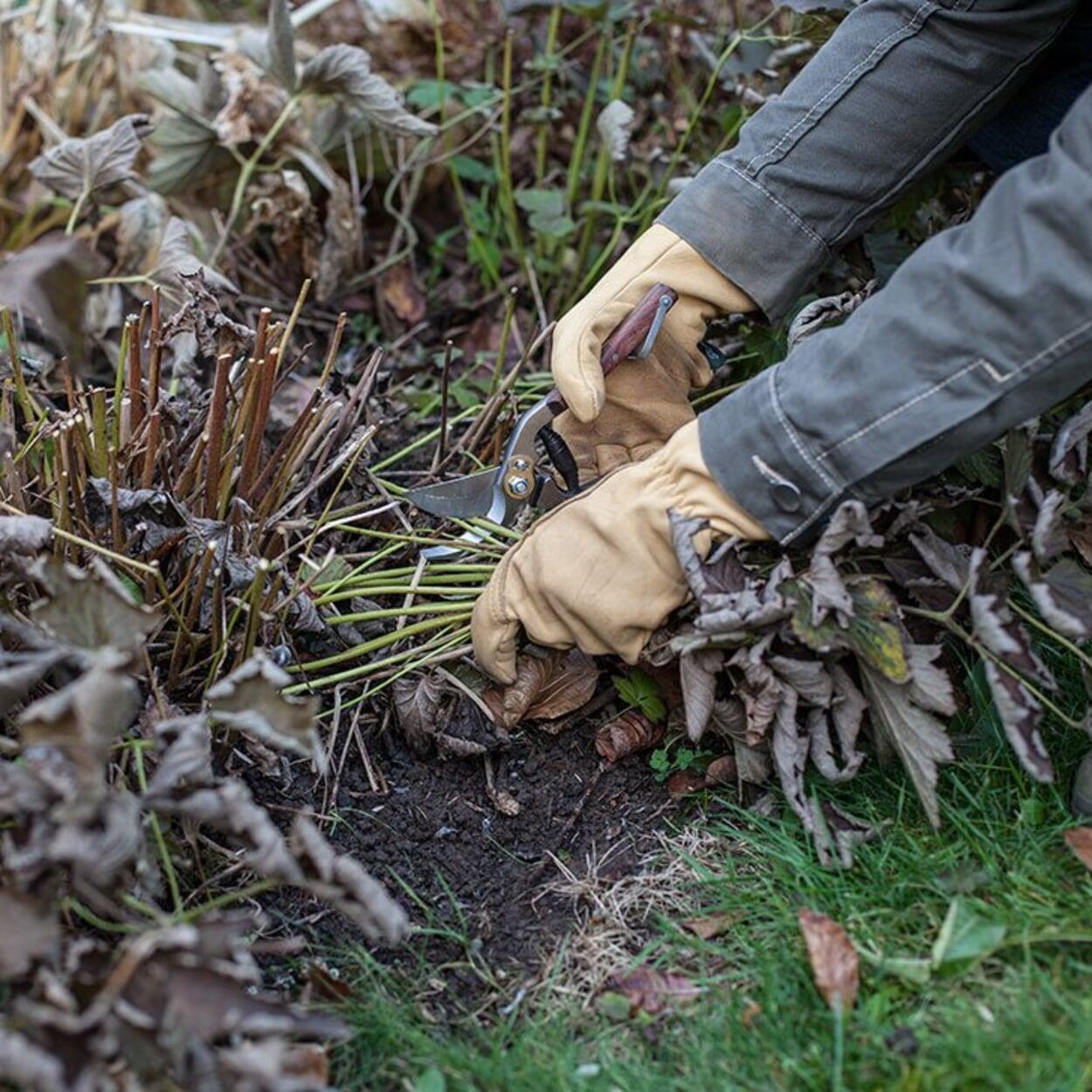 Blätter des Vorjahres entfernen und Laub aus den Beeten entfernen