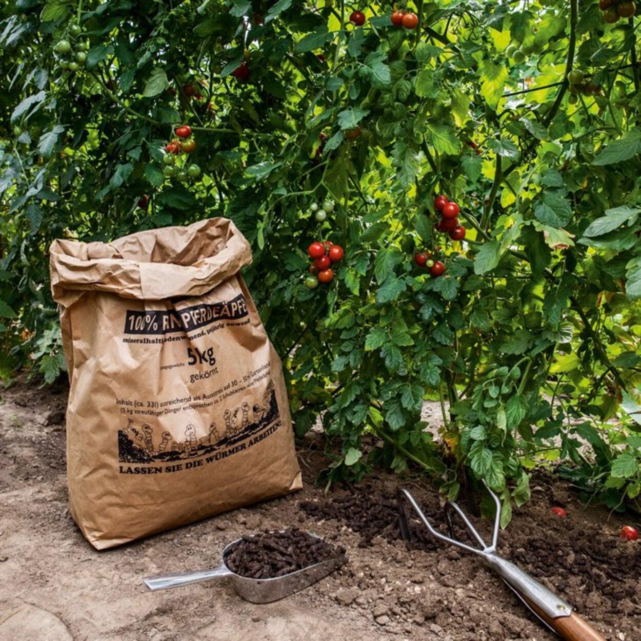 Tomatenpflanzen düngen