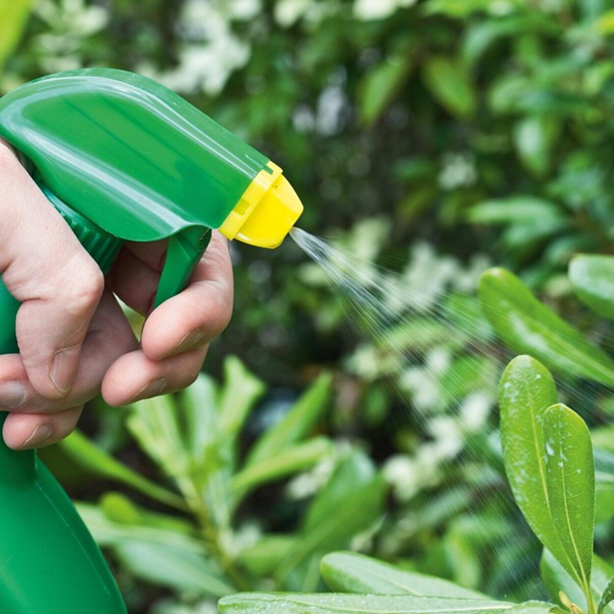 Gegen Blattläuse hilft häufig schon ein Absprühen mit Seifenlauge