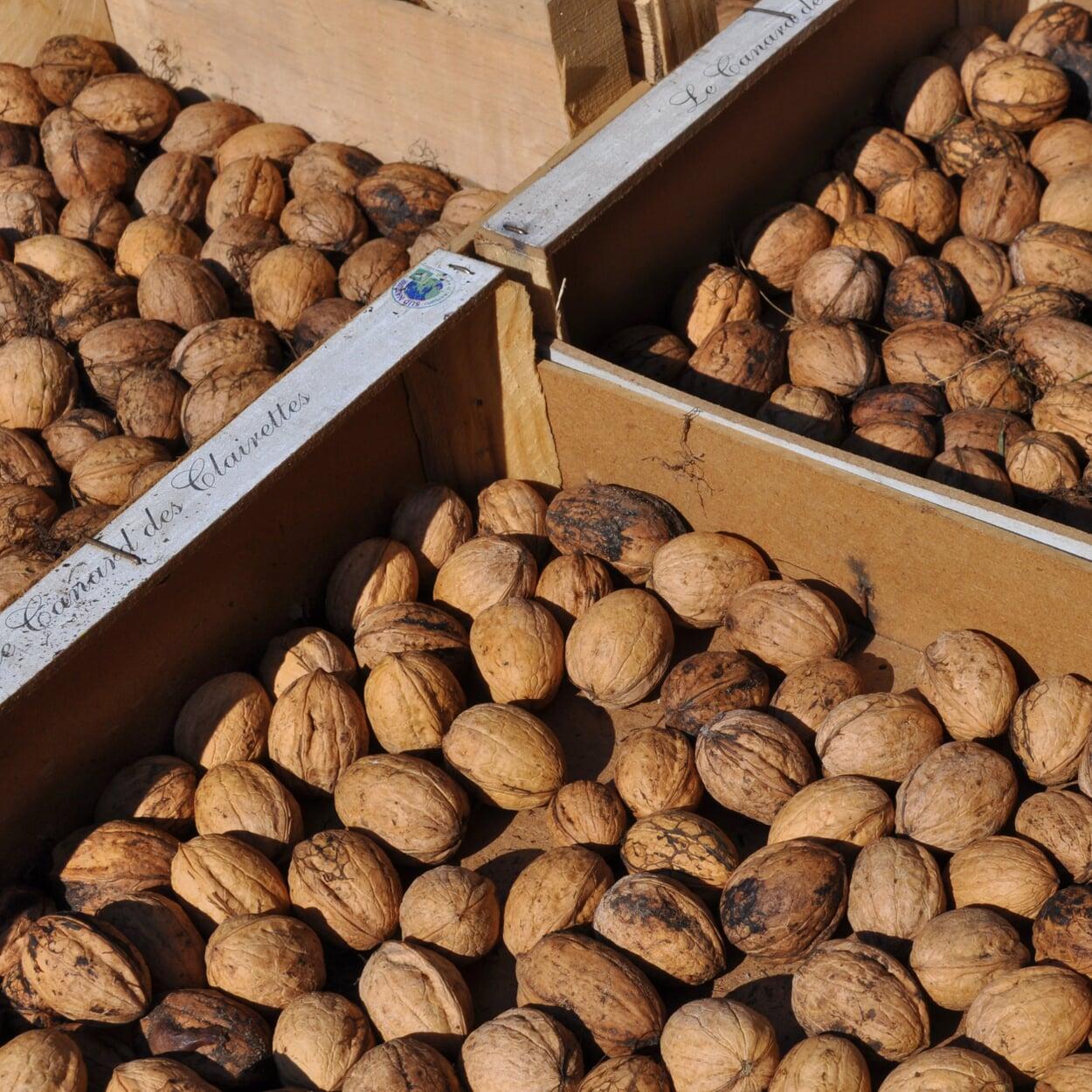 Die Nüsse einlagig – zum Beispiel in flachen Kisten – trocknen