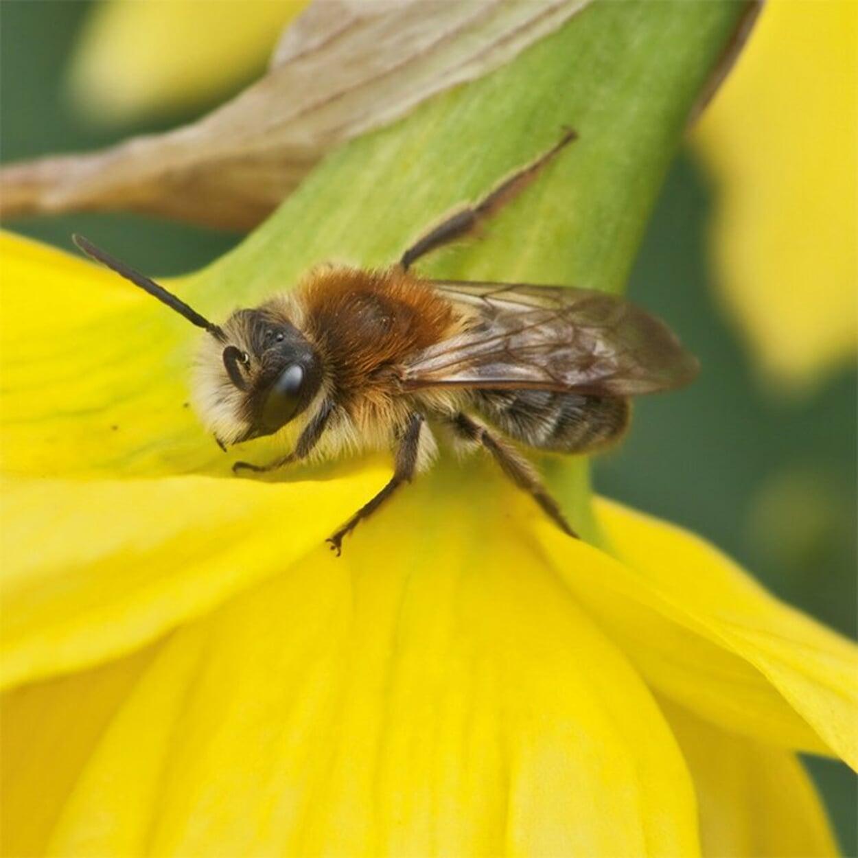 Wildbienen siedeln in hohlen Stengeln oder gebohrten Holzstücken
