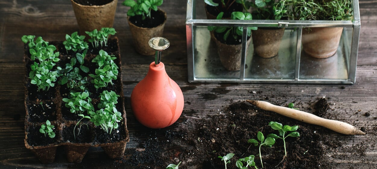 Pflanzenvermehrung über Stecklinge